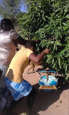 Photo News: South-African Prophet Asks Members To Eat Mango Leafs; Declared It To Be Spaghetti, Pizza, KFC